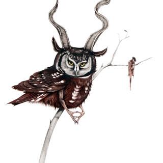 Goat Horned Devil Owl
