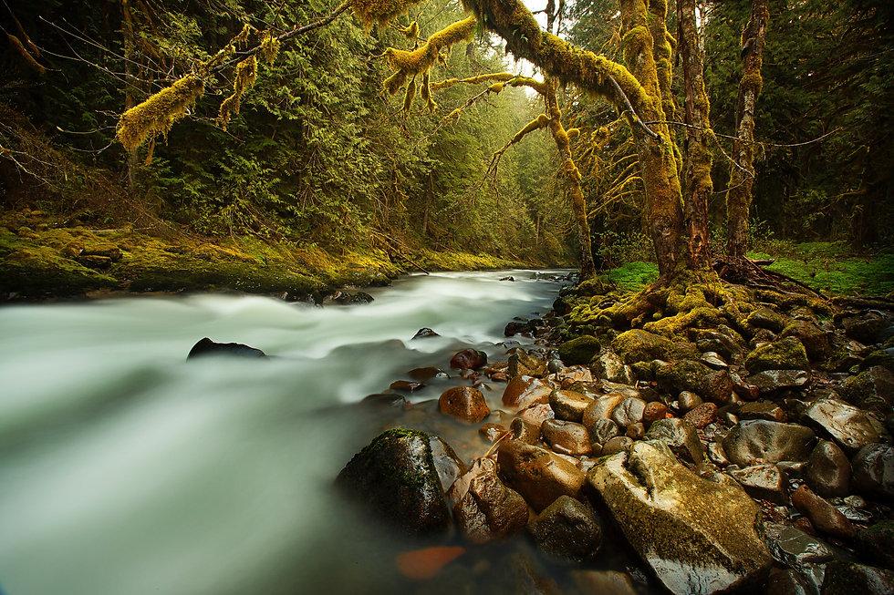 creek-731483.jpg