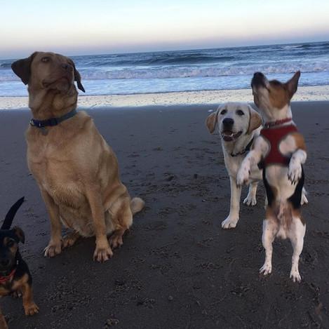 Sjye, Jura, Duke & Buddy.jpg