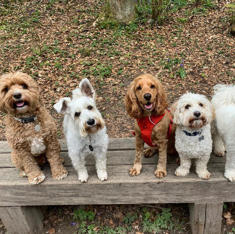 Monty, Max, Ruby, Mojo & Gizmo.jpg
