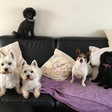 Poppy, Maggie, Ollie, Tarren & Princess.