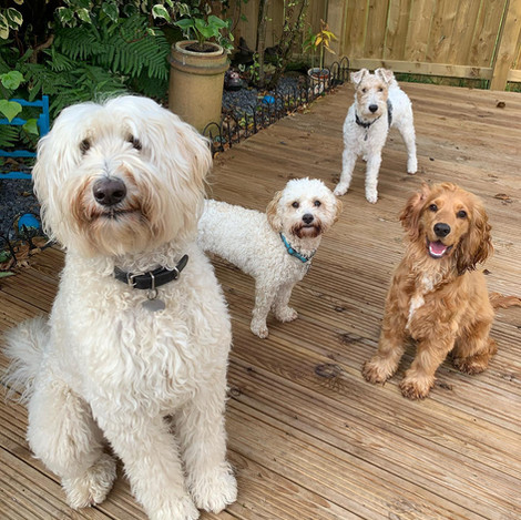 Georgie, Ruby, Basil & Mojo.jpg