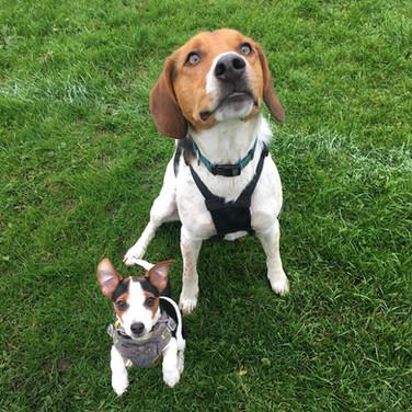 Monty & Bonnie.jpg