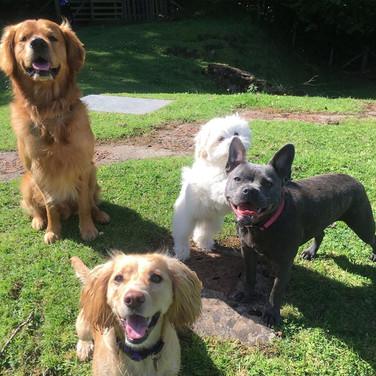 Bella, Millie, Gizmo & Chester.jpg