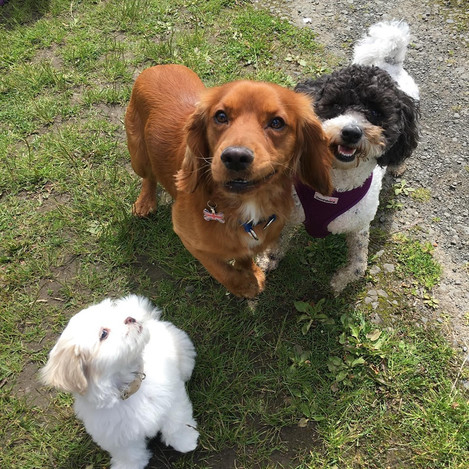Gizmo, Gibson & Lola.jpg