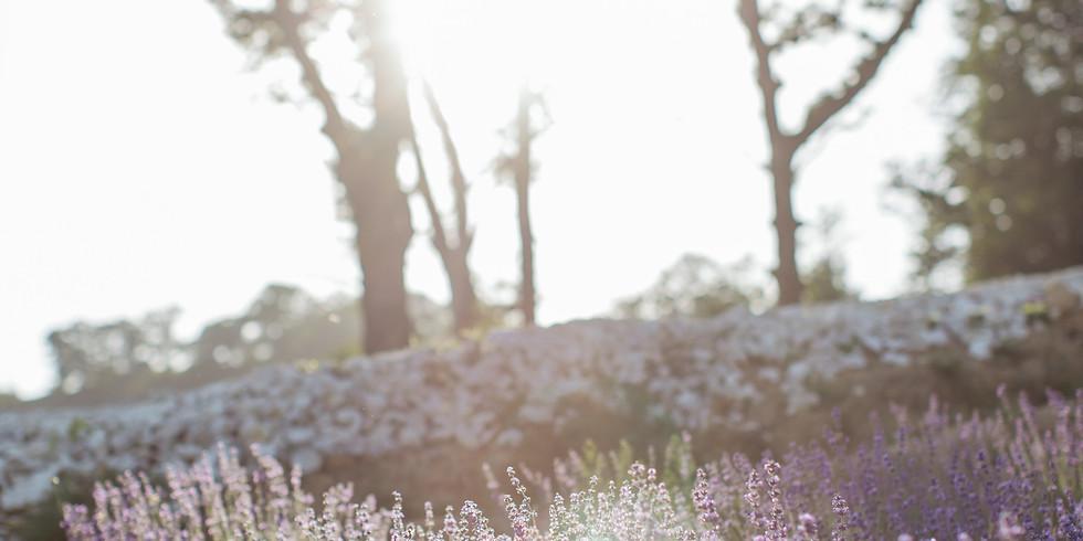 Führung & Wildkräutergourmetküche auf dem Permakulturhof Chuderboden
