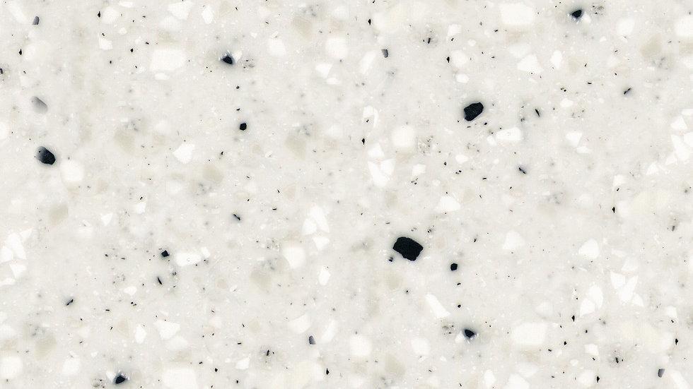 G071 Dalmatian