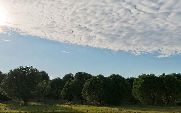 COMPAC Reforestation .jpg