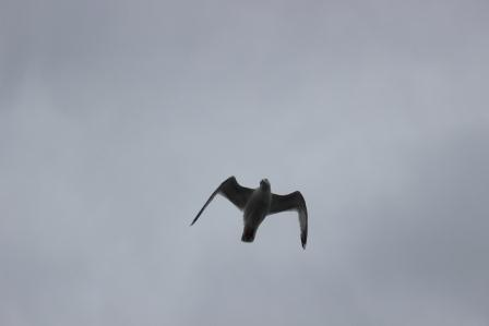 drone_846