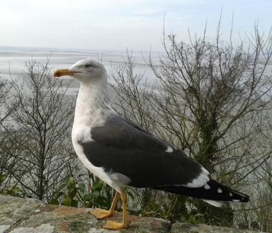 oiseausable41