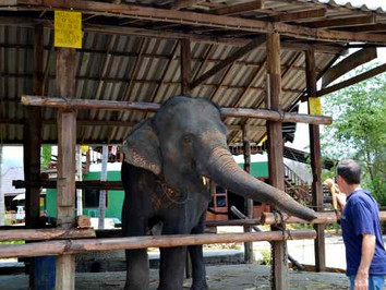 23. Linkee and the Elephant Adventure