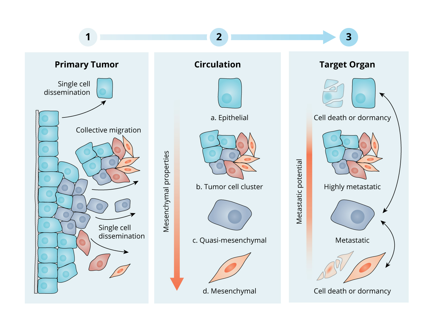 Nature Review Cancer Figure