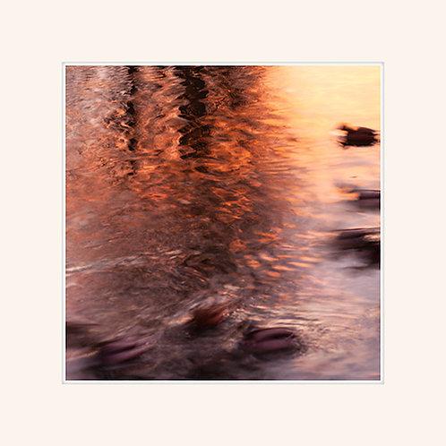 Ducks' Dawn