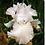 Thumbnail: Iris