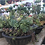 Thumbnail: Succulent Bowl Planter