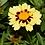Thumbnail: Coreopsis