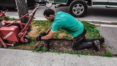 Removing old grass using sod cutter