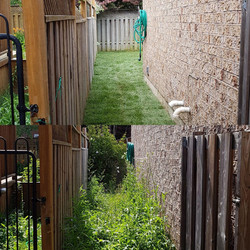 sod project before and after