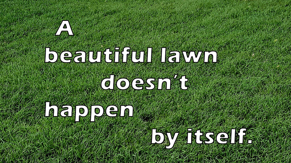 how maintain new sodded lawn
