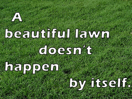 HOW TO MAINTAIN YOUR NEW SODDED LAWN