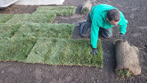 laying new sod
