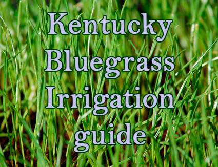 How to water Kentucky bluegrass. Irrigation guide.