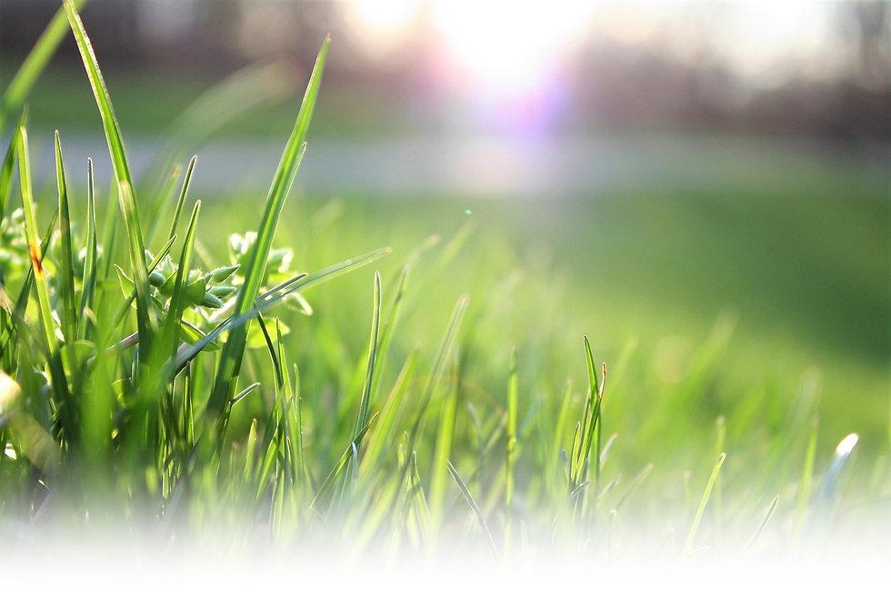 blade-of-grass-depth-of-field-environmen