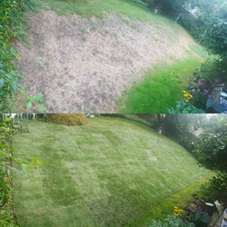 sodding before and after