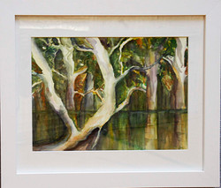 Reflections on the Murray