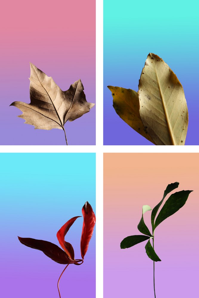 16-18 PHOTOGRAPHY_Kelsey Jenkins_Autumn Leaves_$50