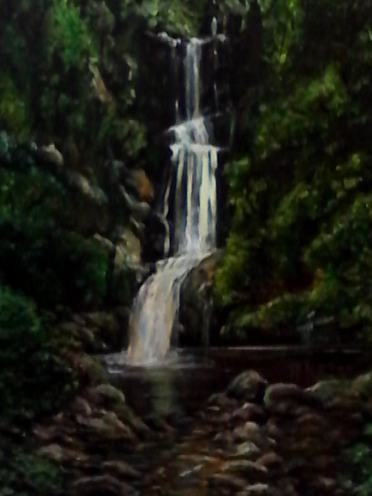 ART_Anne Johnston_Waitakere Bush Stream_$225