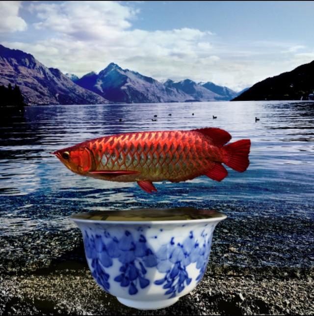 3rd TRUSTS PHOTOGRAPHY $200_16-18 _Jiayin Fu_Fish & Green Tea W