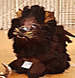 Gerry Andrews_Lion of Judah.jpg