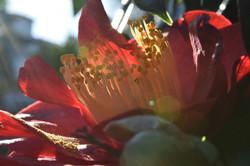 16-18 PHOTOGRAPHY_Eric Liyu_Flower_$50