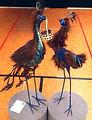 Gerry Andrews_Love Birds_$200 s.jpg