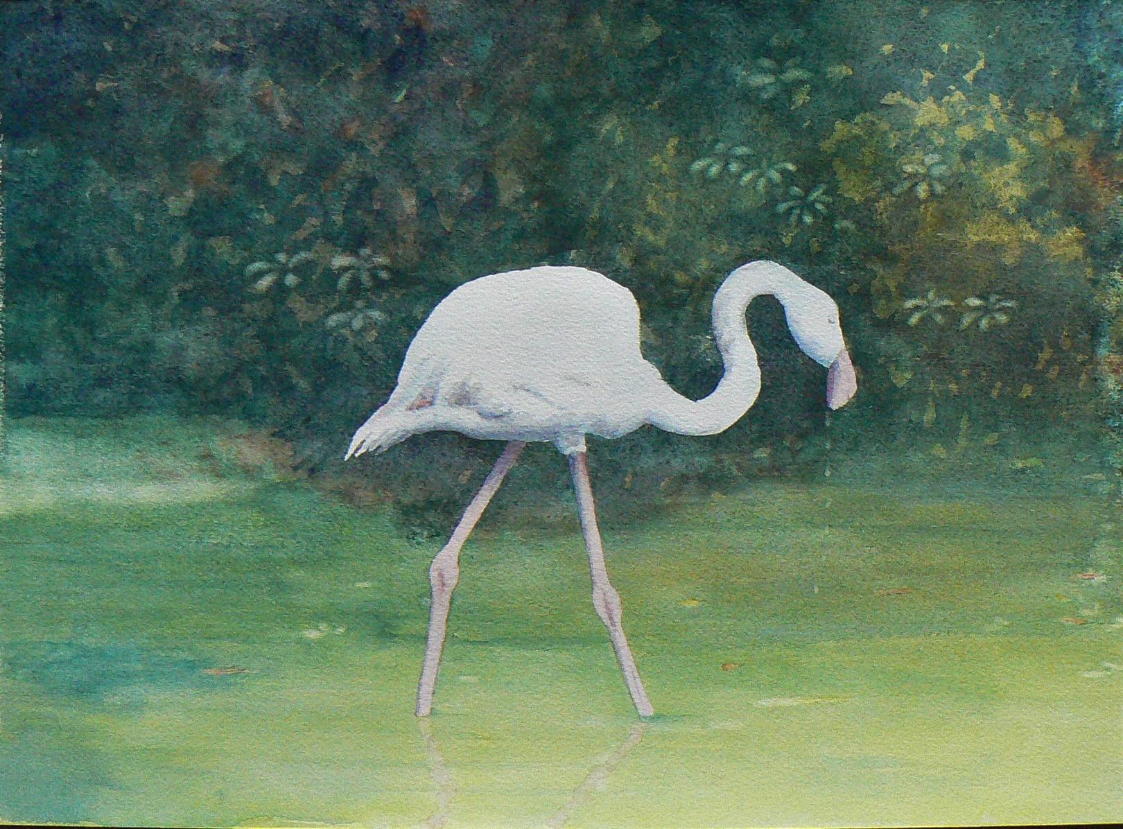 Norton_Phillip_Flamingo