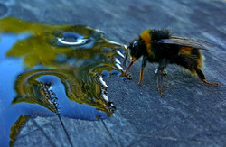 16-18 PHOTOGRAPY_Courtney Costello_ Landscape from a Bee's perspective_$120