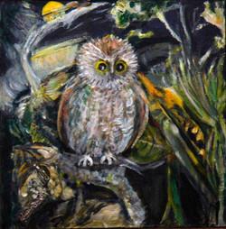 Owl Night Watch