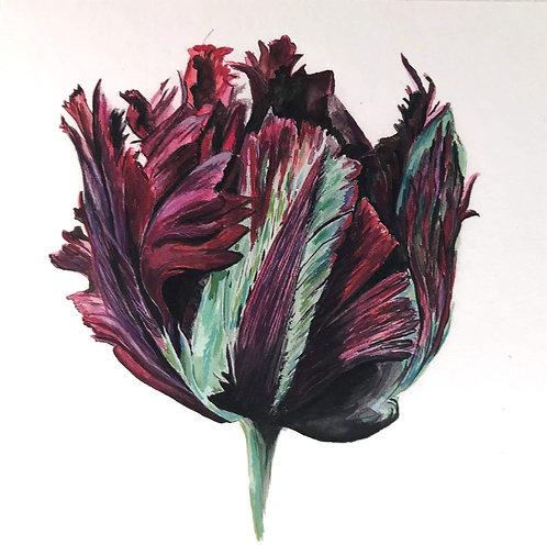 Black Parrot Tulip Håndmalet Kort