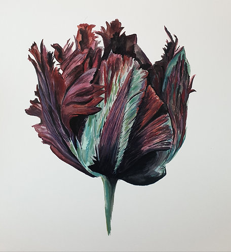 Black Parrot Tulip Print