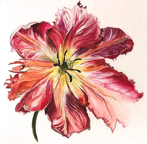 Pink Tulip Original