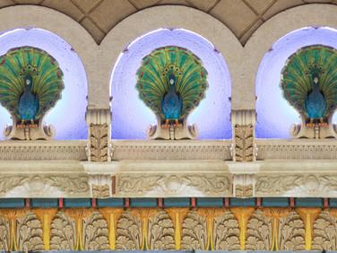 Peacock at Proscenium