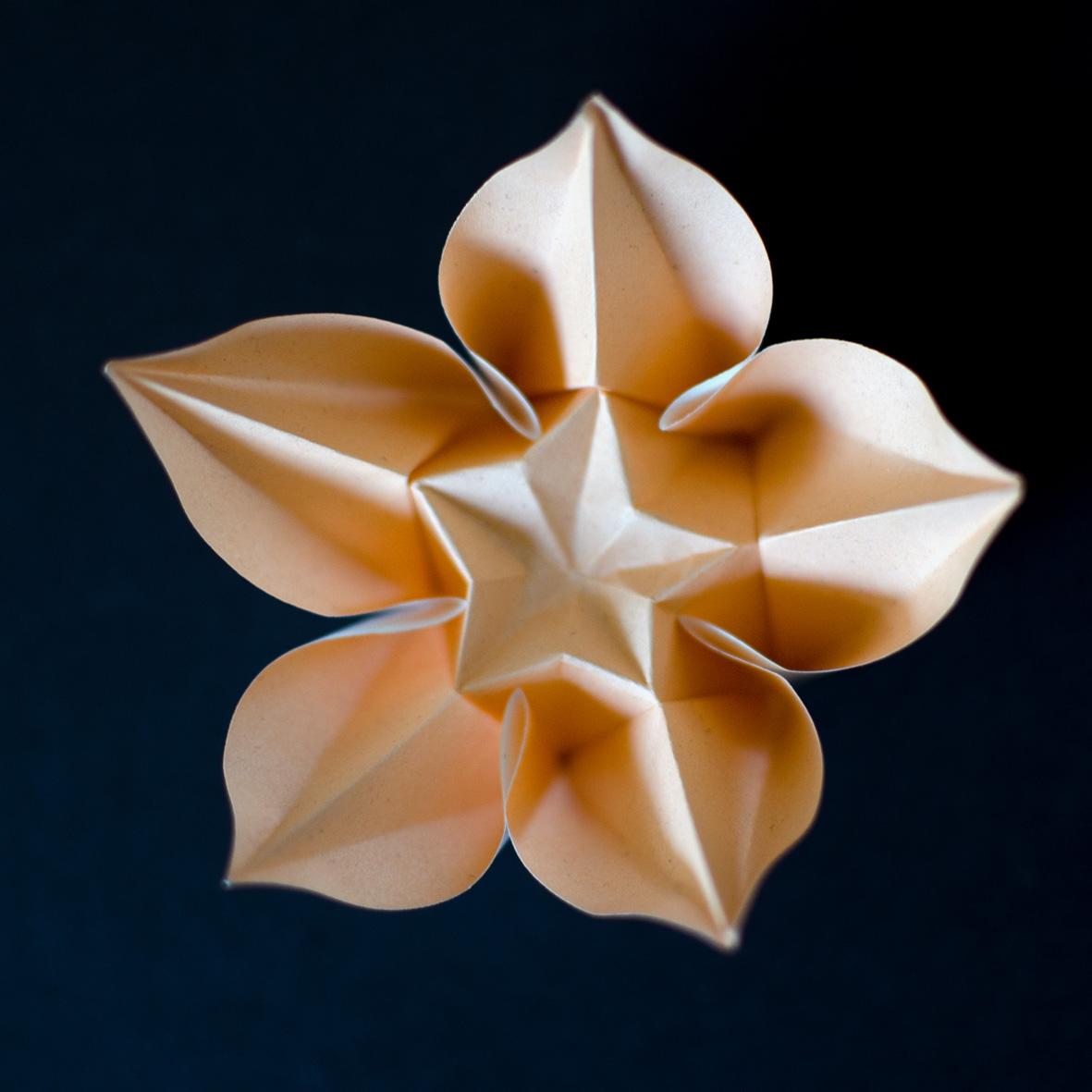 Flor Carambola