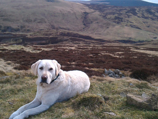 Five lessons from a Labrador