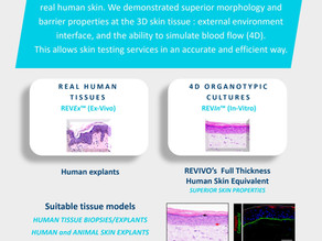 4D Human skin models are now available