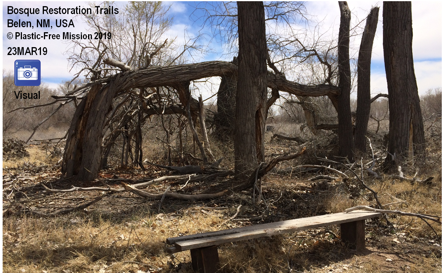 Bosque Restoration Trails, Belen, NM, USA