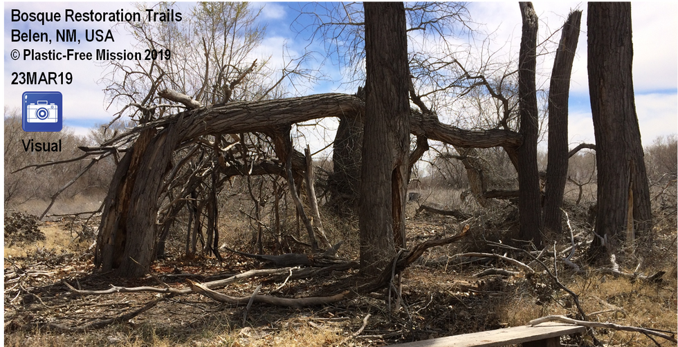 Bosque Restoration Trails, Belen, NM, USA