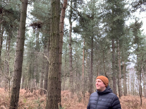 Pete escapes to Allerthorpe Wood