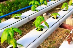 Hydroponics method of growing plants usi
