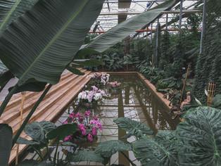 Сад орхидей Раффайнер